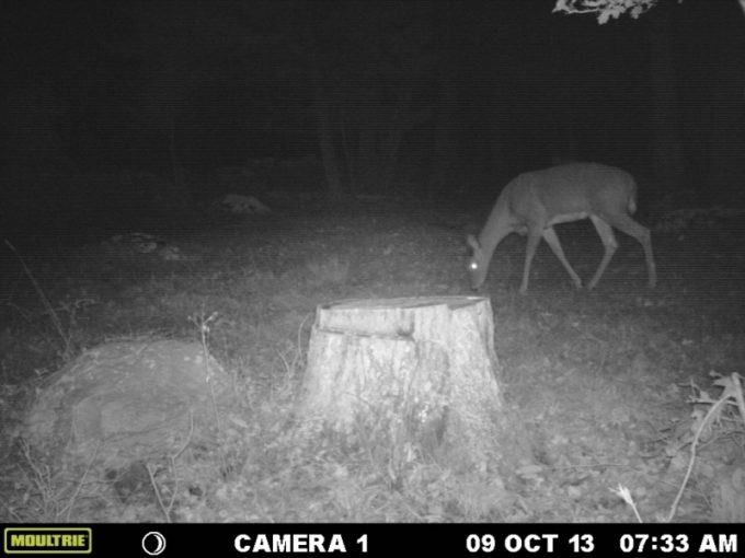 Moultrie A5 night camera shot
