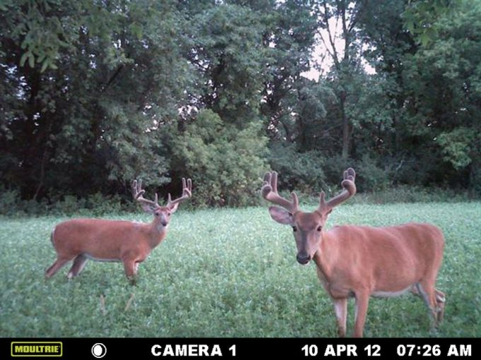 Moultrie game spy camera shot