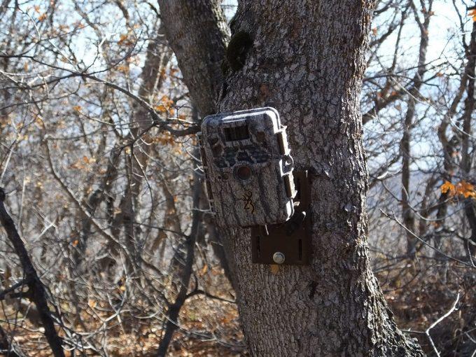 Trail cam set on a tree