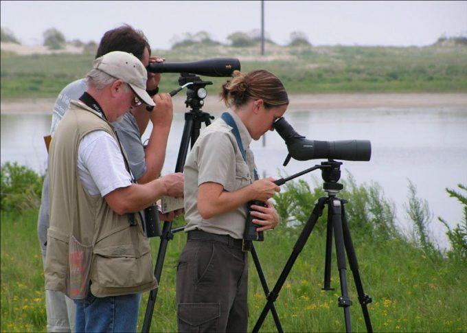 Watching wildlife using spotting scopes