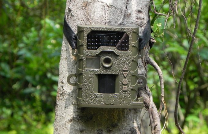 Trail cam set on tree