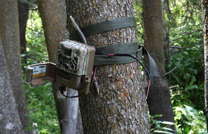 Trail camera attacked