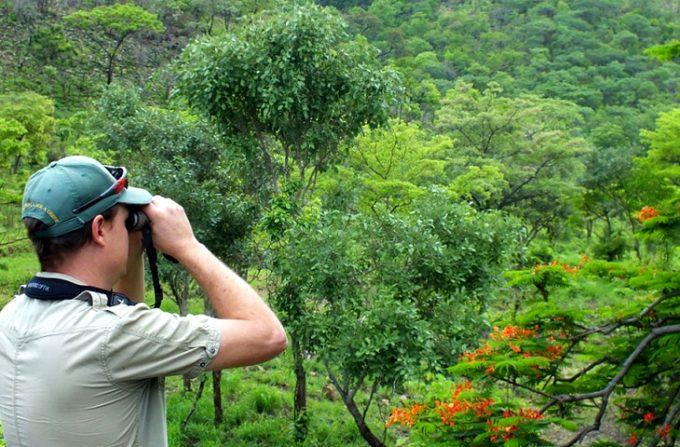 Man using binocular for birding