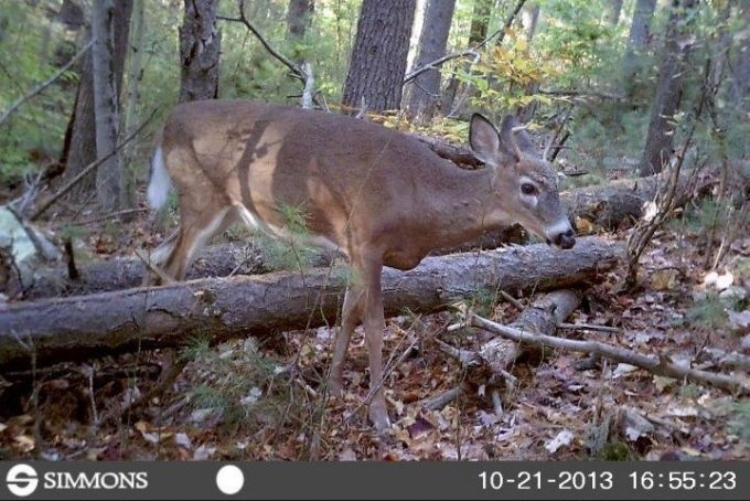 Simmons Trail Camera in Use