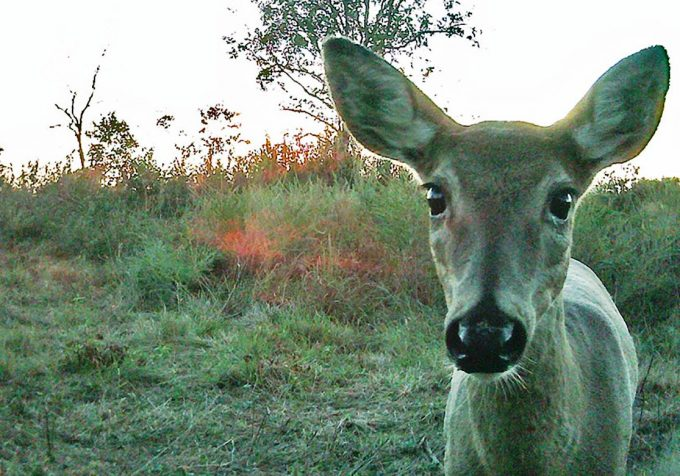 Taking Pictures with Trail Camera