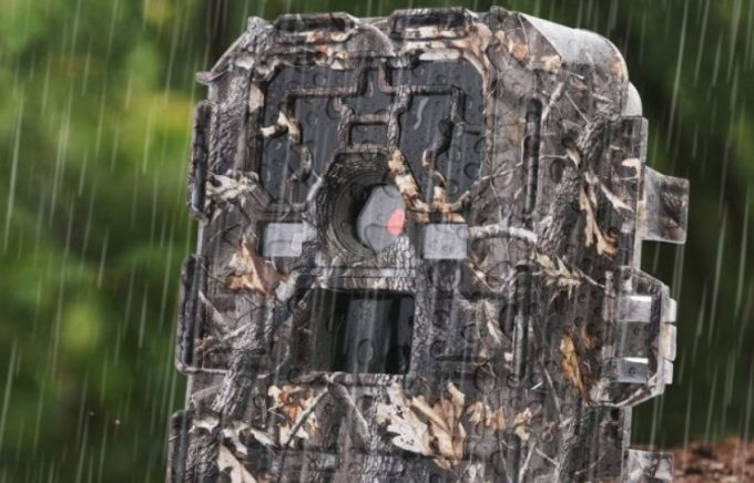 How Do Trail Cameras Work: Capturing the Best Nature Moments